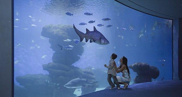 Visit Palma Aquarium