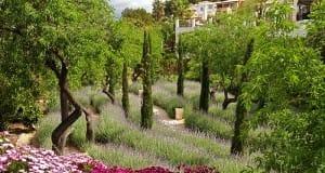 Creating an amazing garden in Mallorca