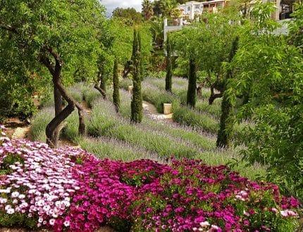 garden-designer-Ali-Warren-Gash-02