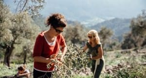 Traditionelles Olivenöl pressen auf Mallorca