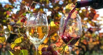 Weinprobe zwischen den Weinreben