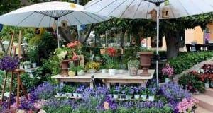 Fourth 'Unusual Botany Fair' in Puerto Portals