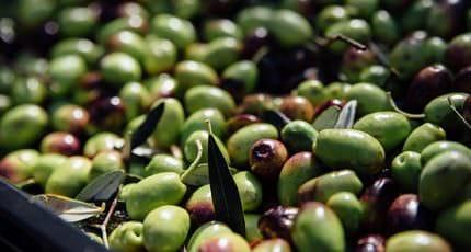fira-oliva-img01