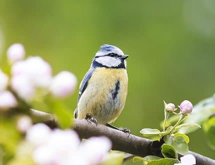 Bird Watching Mallorca
